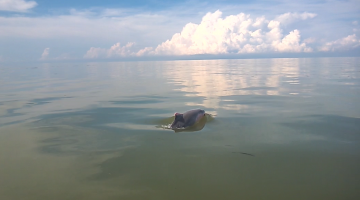 Volunteering with MareCet – Matang Dolphin Research