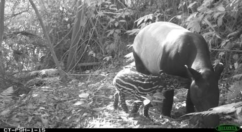 Mammal Talk: Fruit gardens enhance mammal diversity and biomass in a Southeast Asian rainforest