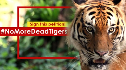 Enough is Enough! #NoMoreDeadTigers Petition
