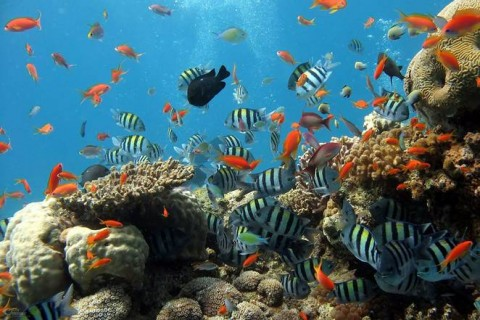 Malaysia creates 1 million hectare marine park, but allows commercial fishing