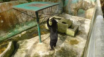 Save the Sun Bears from the Miri Crocodile Farm