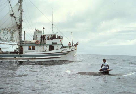 Paul Watson on top of killed whale calf in foreground, Phyllis Cormack in background.