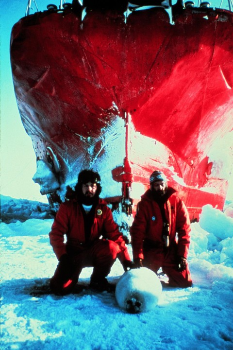 Greenpeace seal campaign activists Paul Watson and Bob Hunter sit down with a Harp seal pup and blockade a Norwedian sealing ship on the Labrador ice floes,  during the 1976 Canadian seal hunt.