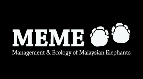 MEME Updates 12, summer 2016 – Stories about elephants from Malaysia