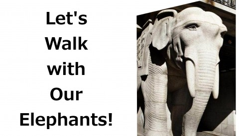 "THURSDAY, 11TH AUGUST 2016 – ""LET'S WALK WITH OUR ELEPHANTS!"""