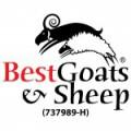 Best Goats & Sheep